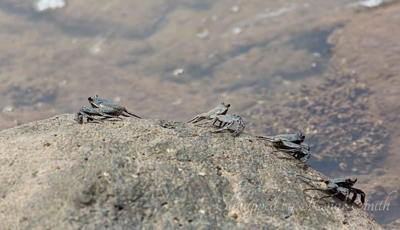 The sideways-walking crabs