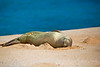 Aaahhh, the Life!<br /> <br /> We got to see an adorable monk seal on the beach.  They're endangered, but s/he didn't know it.  He just ignored us completely.  They're known to be special 'cuz they have a more human-like face that makes them especially cute.