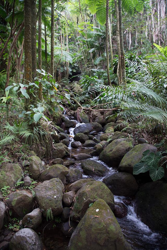 Hawaii-5938