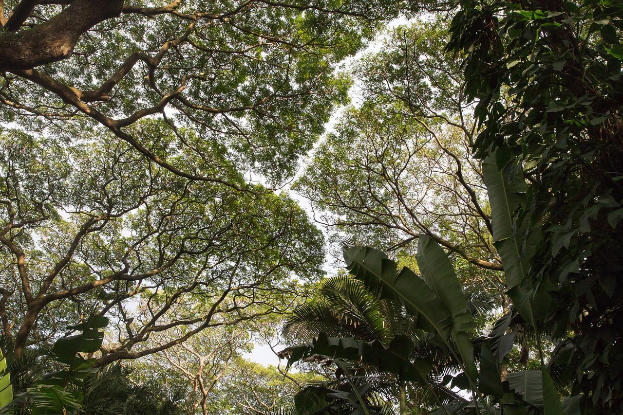 Hawaii-5945