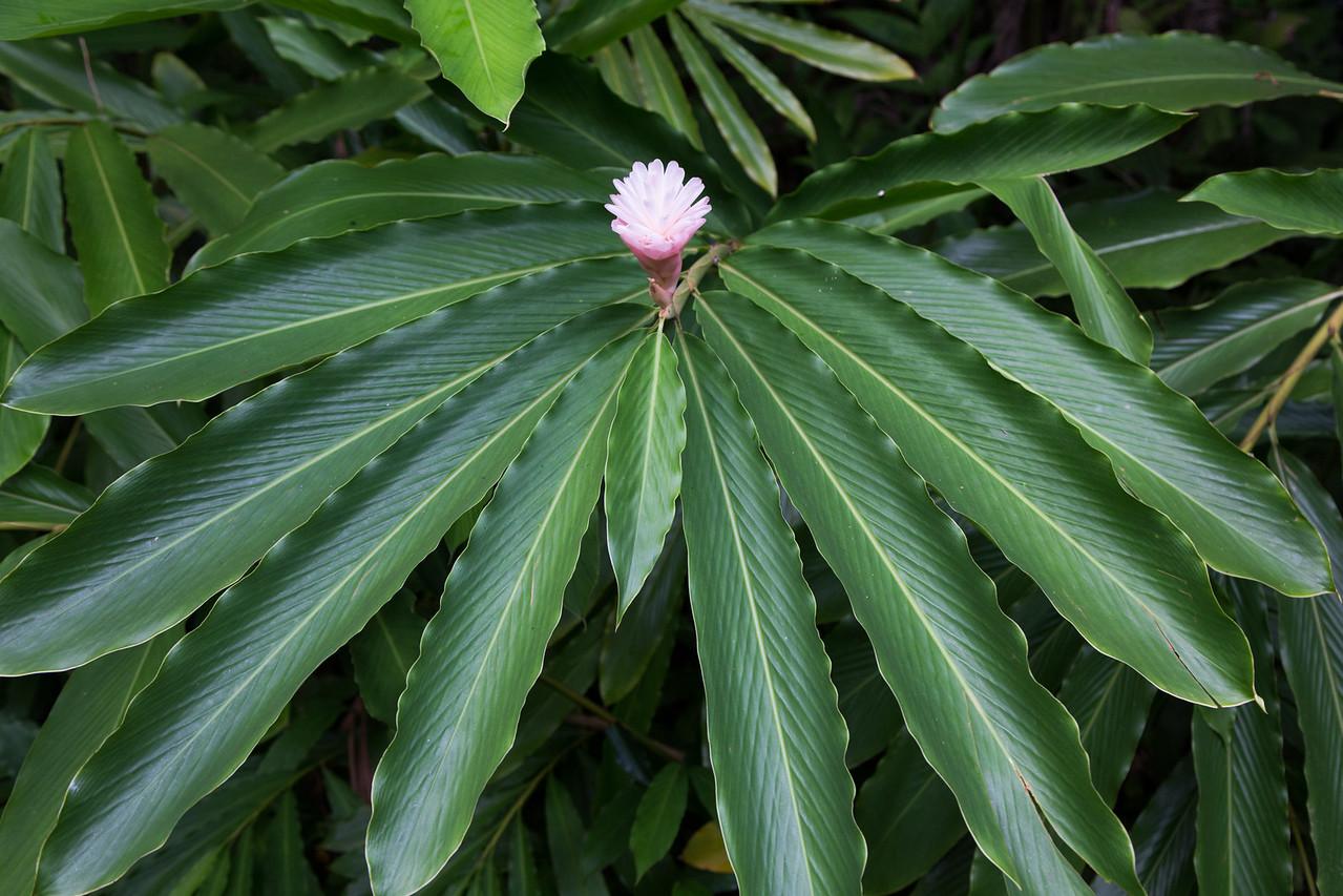Hawaii-5927