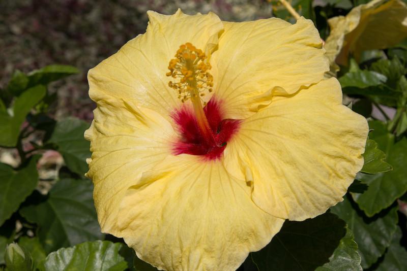 Hawaii-6121