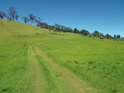 On the Puu Waawaa trail. The grass was unbelievably green, soft and fresh. This is a beautiful place.  Na szlaku na Puu Waawaa. Trawa byla niesamowicie zielona, miekka i swieza. To piekne miejsce.