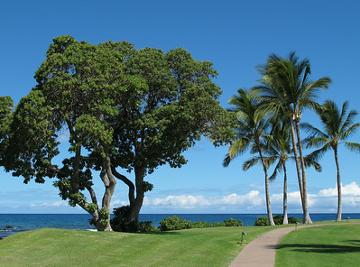 On the grounds of the Fairmont Orchid.  Na terenie hotelu Fairmont Orchid.