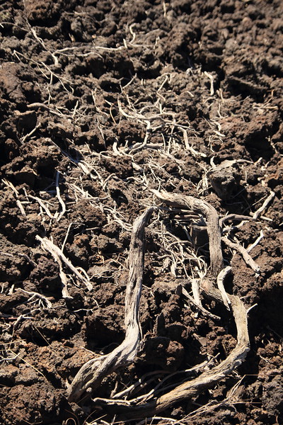 Roots taking hold in the lava flow