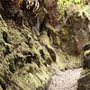 'Iliahi Trail