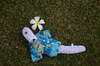 hawaii2016-1
