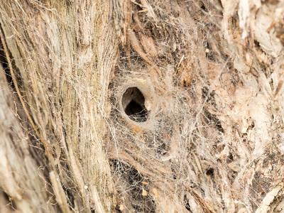 Spider web at KMC on Kilauea