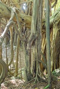 Banyan network, Hilo