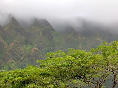 Rain Forest - Oahu