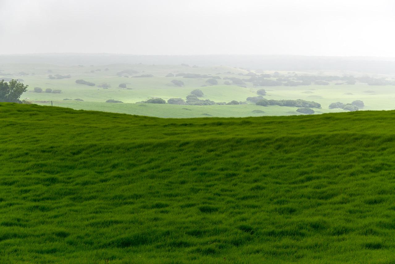 Lush greenery with fog, The Big Island, HI - March 2018