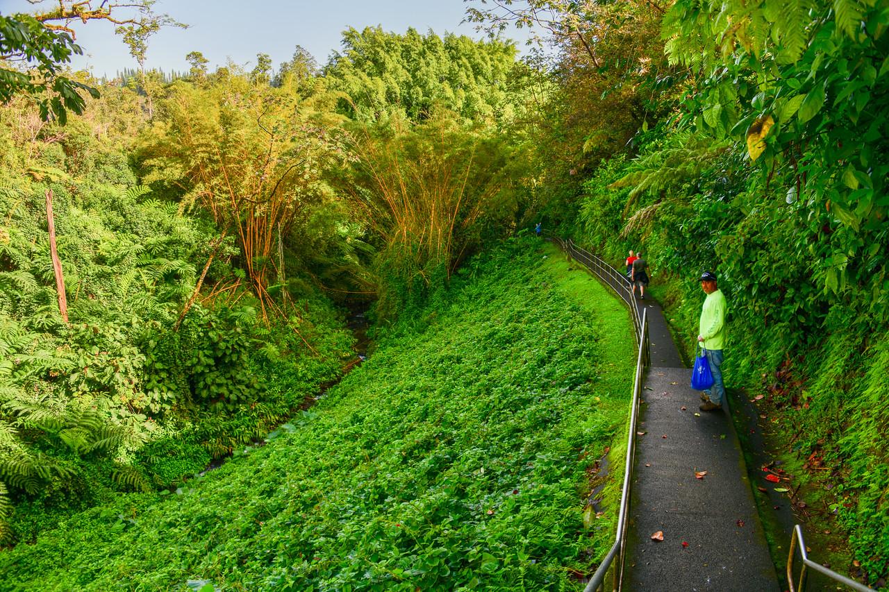 Walkway leading to Akaka Falls on the Big Island, HI - March 2018