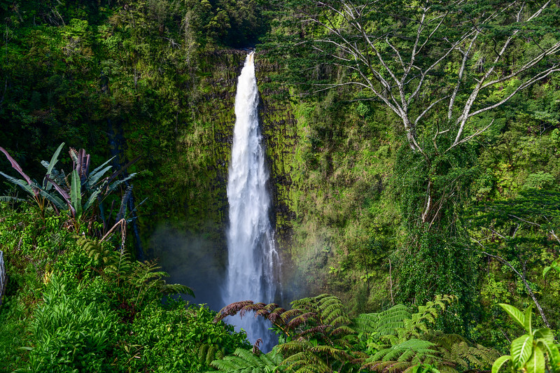 Akaka Falls (442 feet) on the Big Island, HI - March 2018
