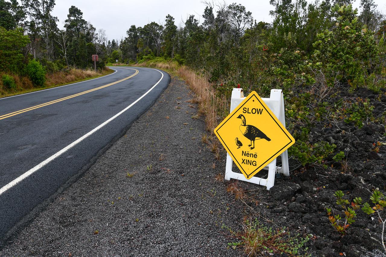 Ubiquitous warning sign for the endangered Nēnē (Hawaiian Goose), The Big Island, HI - March 2018