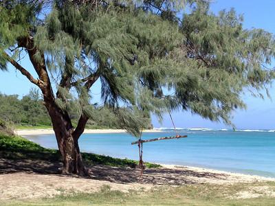 Tree swing at Laie Beach Park