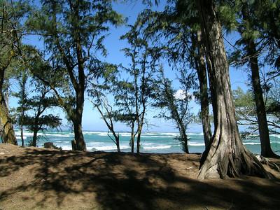 Trees and waves, Malaekahana State Recreation area