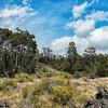 Pu'u O'o Trail On Mauna Loa (Tour Part 2)