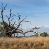 Hulalai Tree On Mauna Kea (Birding Tour)