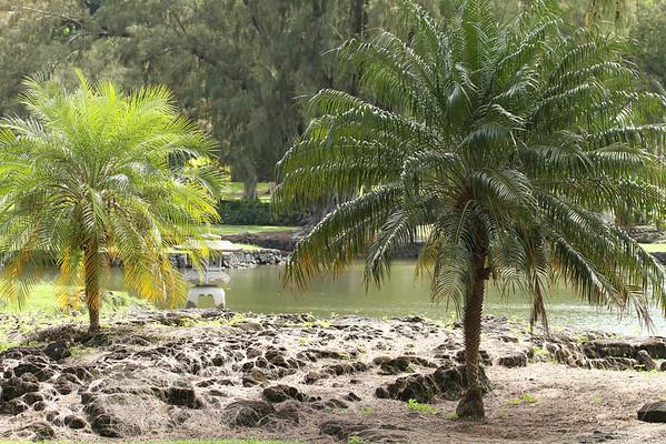 Lili'uokalani Gardens, Hilo, Hawaii