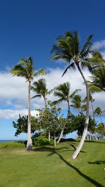 Loving the palm trees.