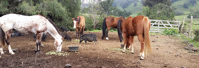 Horses, pigs, goats, sheep, cattle--a true working ranch.
