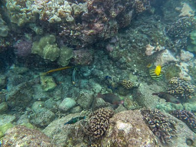 General snorkeling there was not bad either.