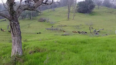 We tried to climb to a crater on the ranch, but it proved a rough climb. A herd of goats and I managed to scare each other as I came over the top of a hill.