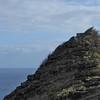 Hike to the Makapuu Lighthouse (bunker)