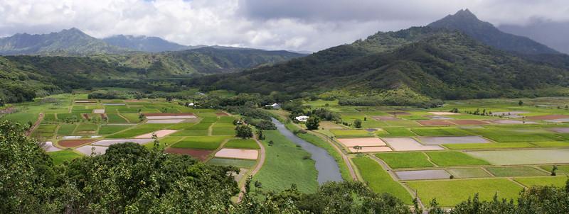 Taro fields, Hanalei Valley Lookout