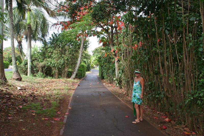 Hike & Bike trail, Ke Iki portion of the North Shore