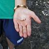 Tiny dead crab
