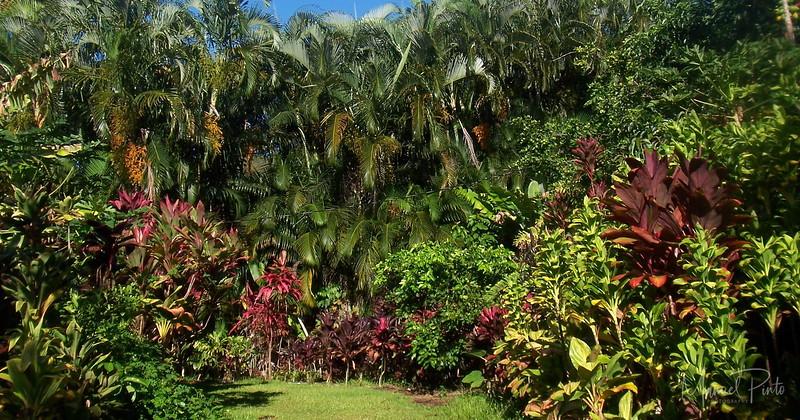 Beautiful ti plant landscape