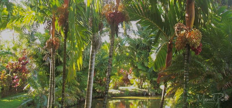 Seeding palms