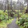Rain forest Kilauea Crater.