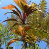 Hawaii Botanical Garden. Big Island.