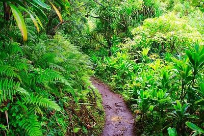 Rainforest @ Nā Pali Coast State Park. Kaua'i, Hawaii, USA.