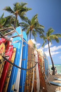 Surf & Palms @ Waikiki Beach. Honolulu, O'ahu, Hawaii, USA.