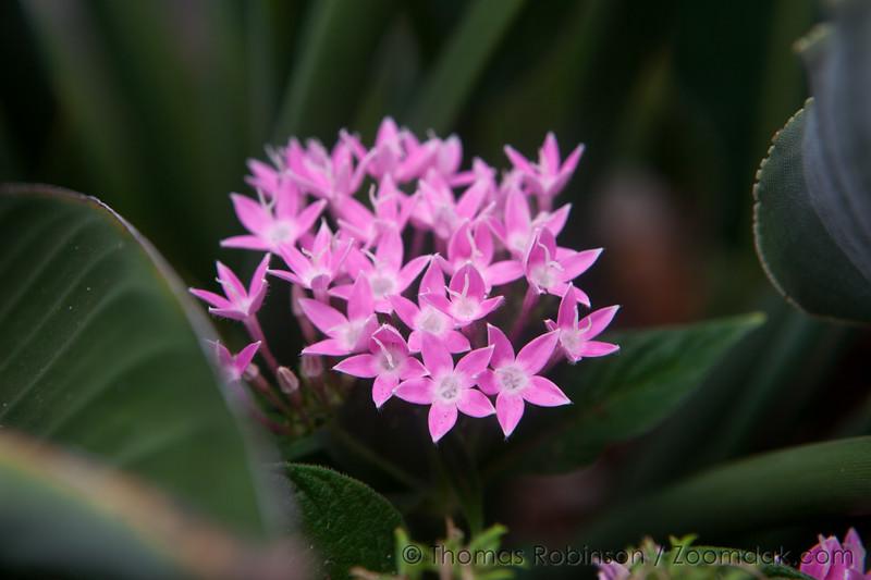 Maui Wildflower