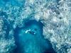 Maui Free Diving