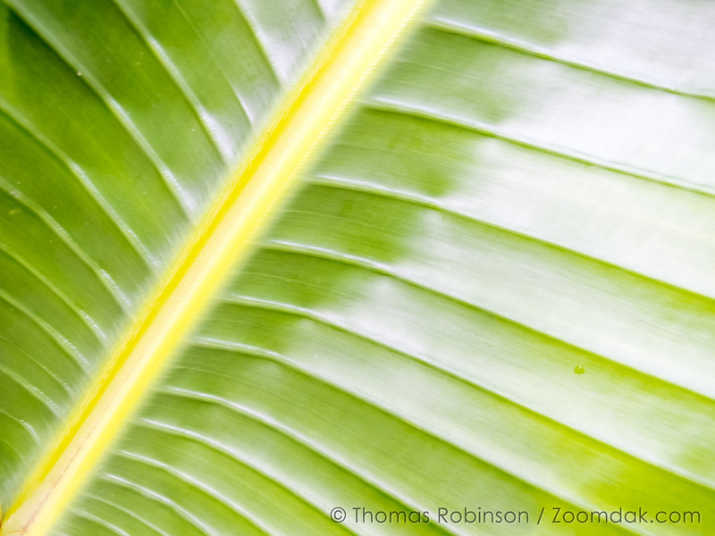 Hawaiian Leaf Texture