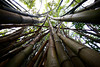 What do you see when you look up into a bamboo forest? <br /> <br /> Invisible Ninjas.