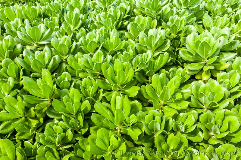 Kauai Flora Textured Plants