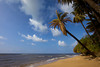 The quintessential Hawaiian scene: blue sky with puffy clouds, a beautiful stretch of yellow beach and palm trees leaning over the ocean.