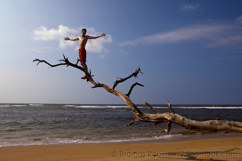 Thomas Robinson enjoys the Hawaiian sunlight while perched on a branch over the Pacific Ocean.