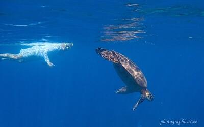 Lee Trad swimming with green sea turtle