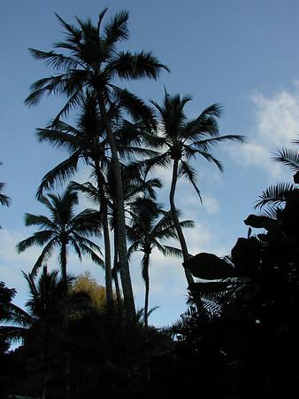Hawaii Vacation 2002