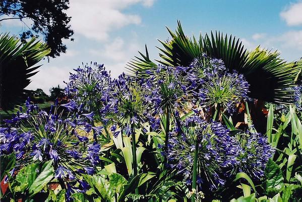 002-Palms & Flowers