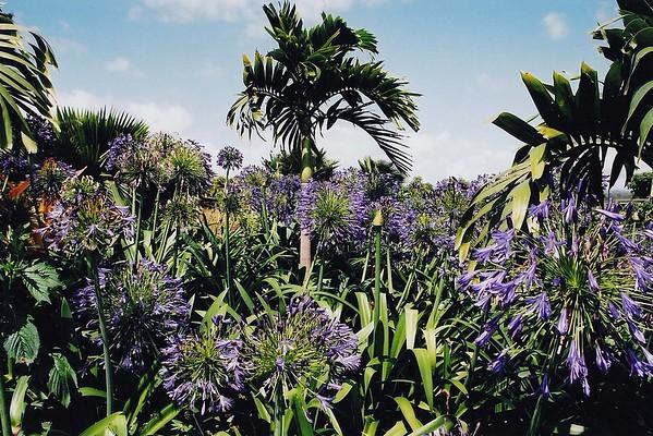 003-Palms & Flowers