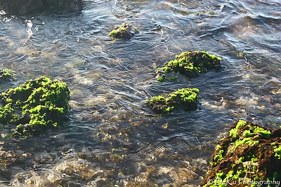 HaleiwaBeach(web)_0021