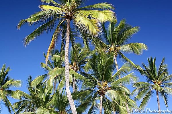 HaleiwaBeach(web)_0014